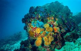 Compound isolated from sea sponge fights cancer cells